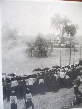 Elephant round up begin 1900