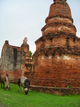 One of the chedi at Wat Phlapphla Chai